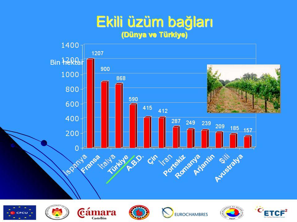 Ekili üzüm bağları (Dünya ve Türkiye)