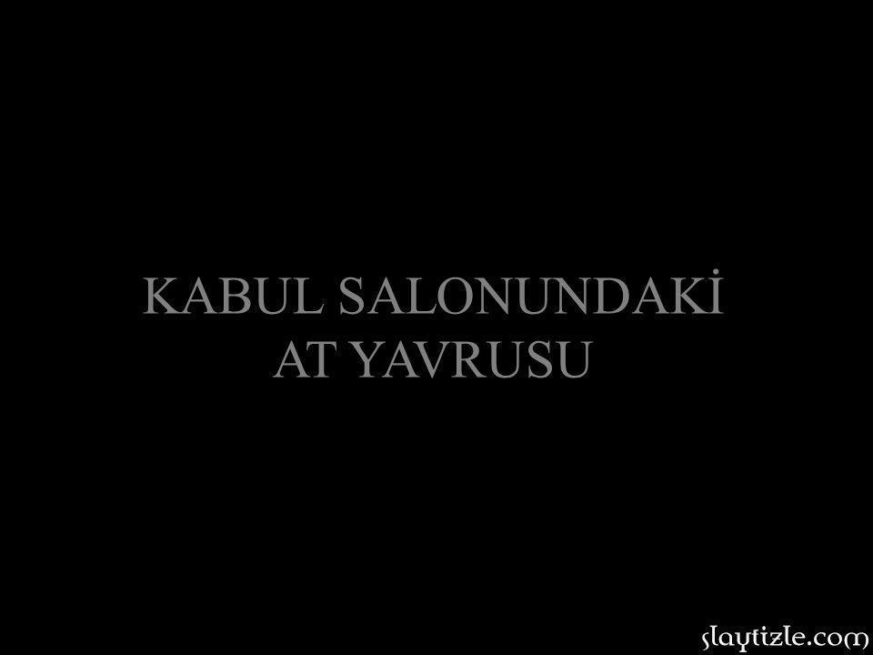 KABUL SALONUNDAKİ AT YAVRUSU