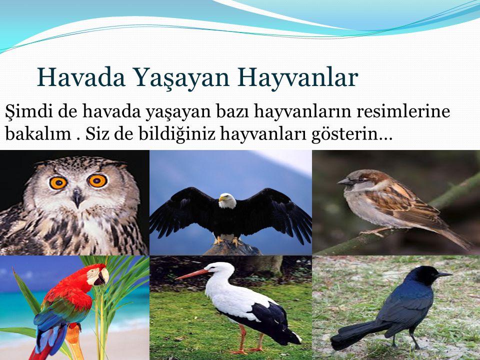 Havada Yaşayan Hayvanlar