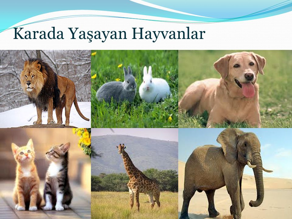 Karada Yaşayan Hayvanlar