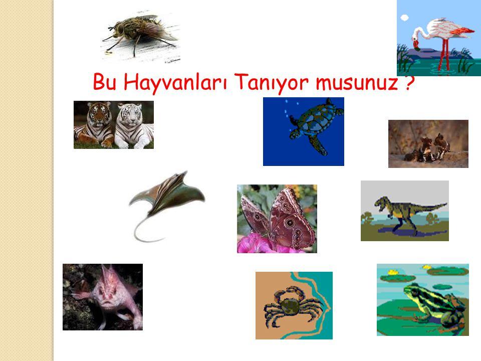 Bu Hayvanları Tanıyor musunuz
