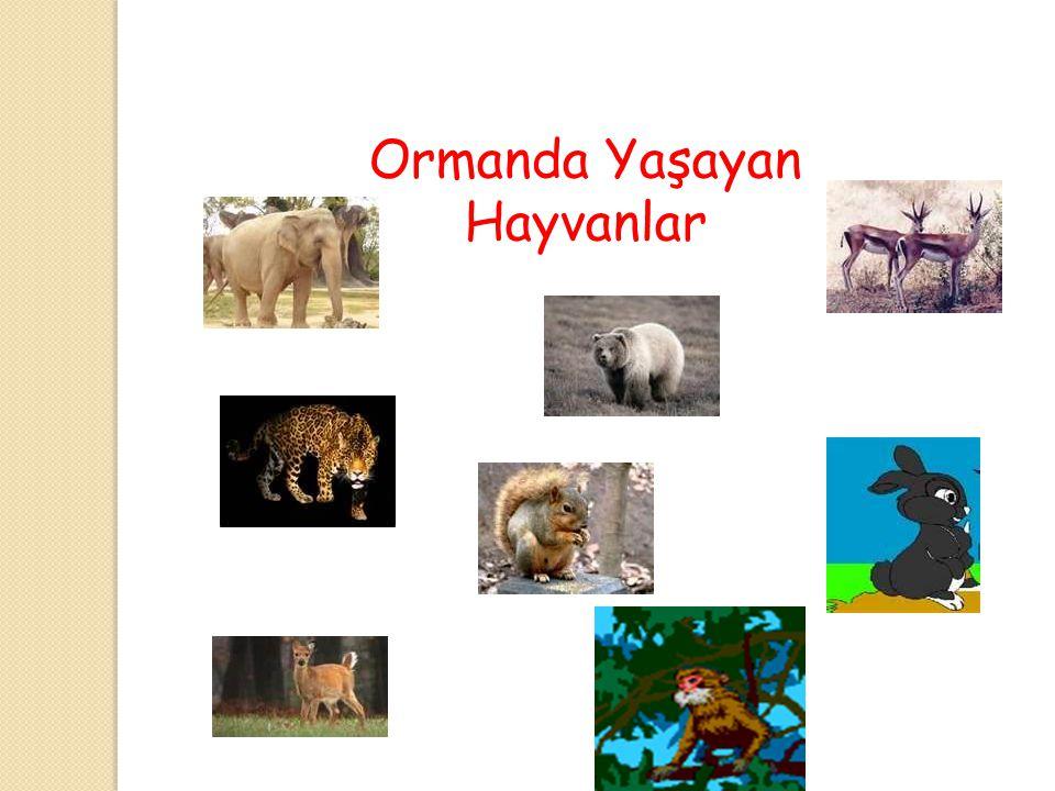 Ormanda Yaşayan Hayvanlar