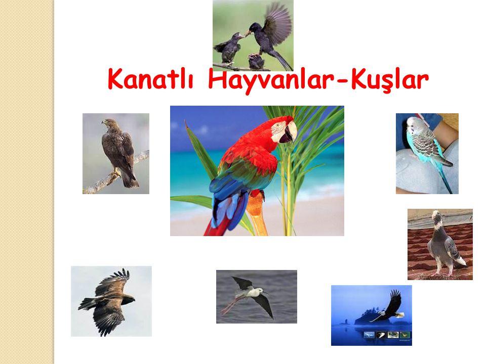 Kanatlı Hayvanlar-Kuşlar