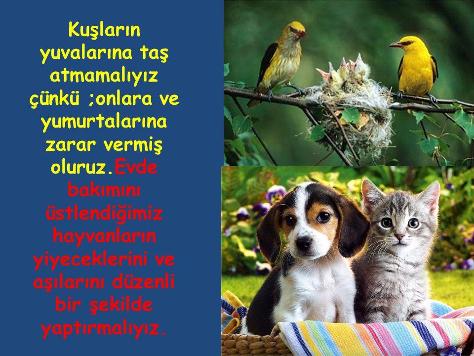 Kuşların yuvalarına taş atmamalıyız çünkü ;onlara ve yumurtalarına zarar vermiş oluruz.Evde bakımını üstlendiğimiz hayvanların yiyeceklerini ve aşılarını düzenli bir şekilde yaptırmalıyız.
