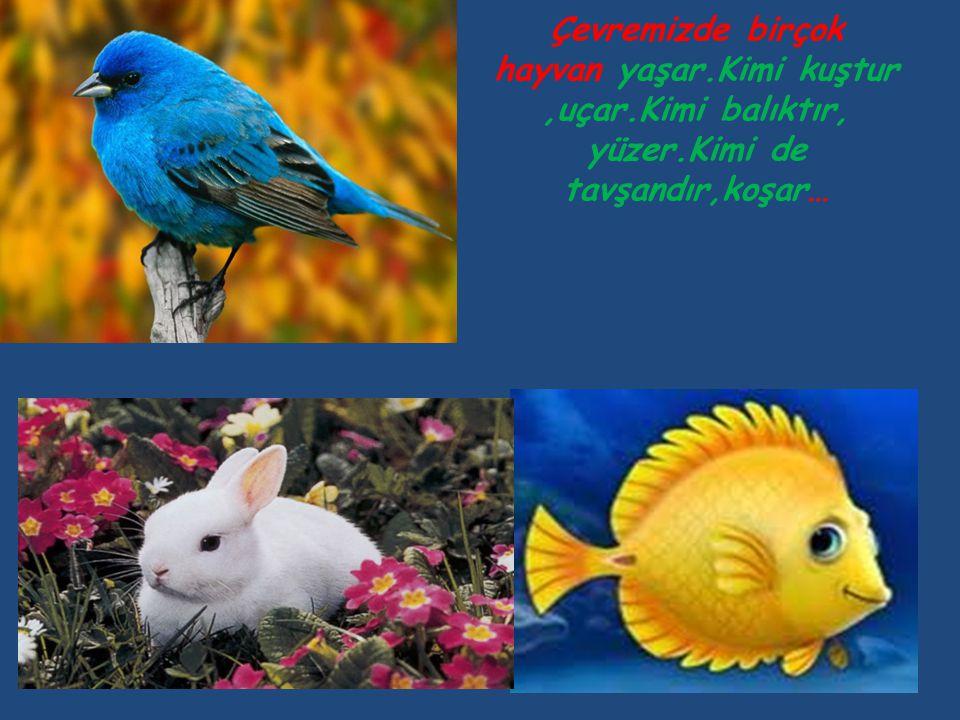 Çevremizde birçok hayvan yaşar.Kimi kuştur ,uçar.Kimi balıktır, yüzer.Kimi de tavşandır,koşar…