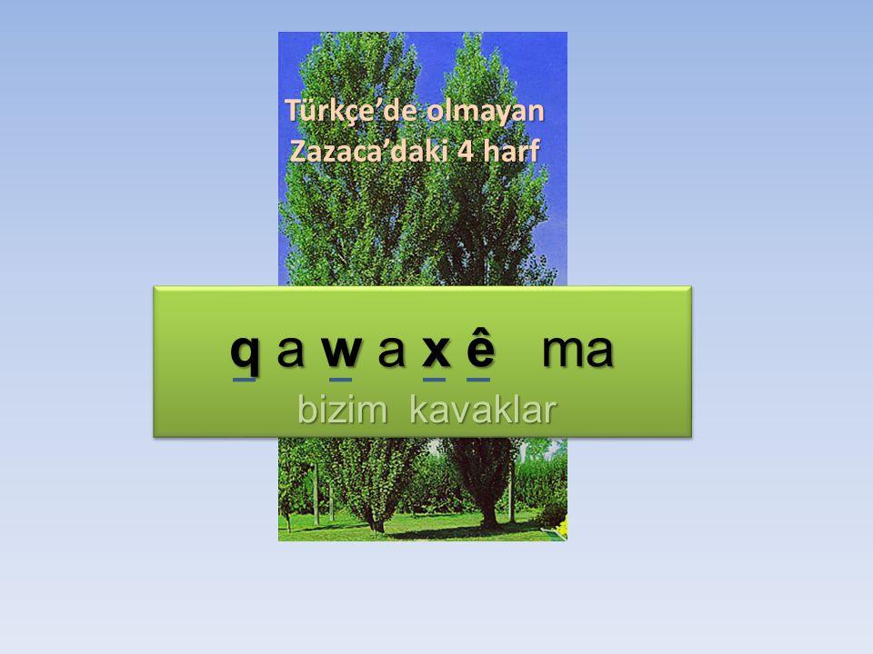 Türkçe'de olmayan Zazaca'daki 4 harf q a w a x ê ma bizim kavaklar