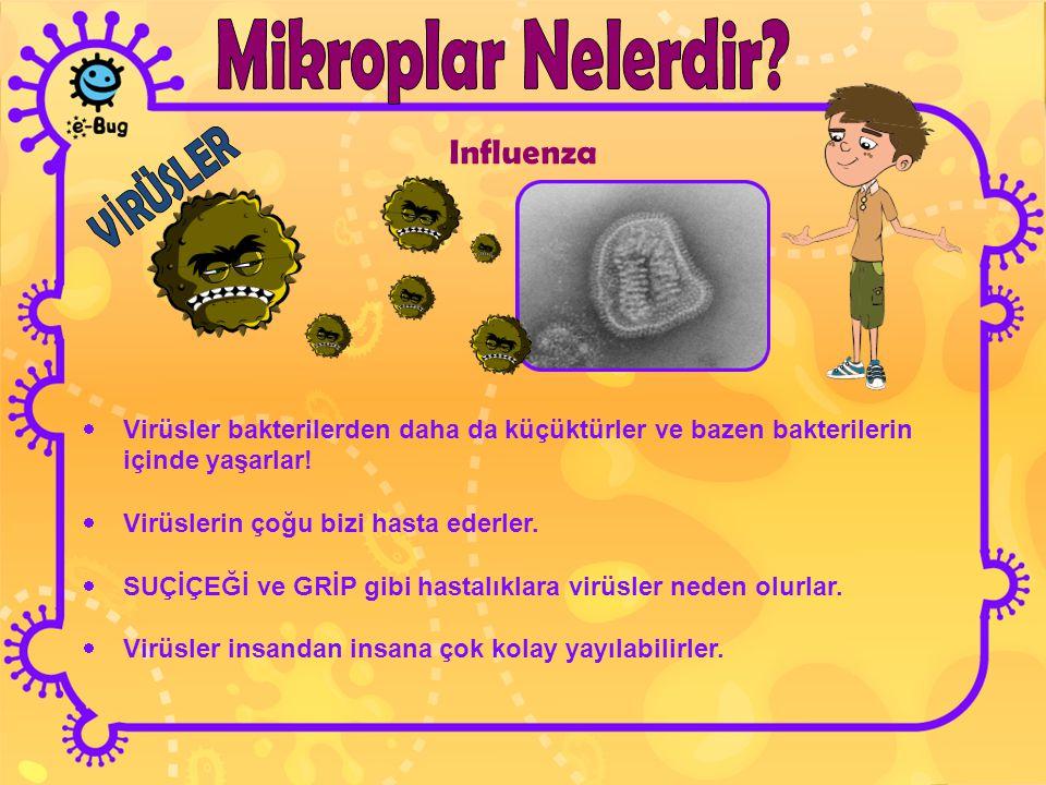Influenza Mikroplar Nelerdir VİRÜSLER