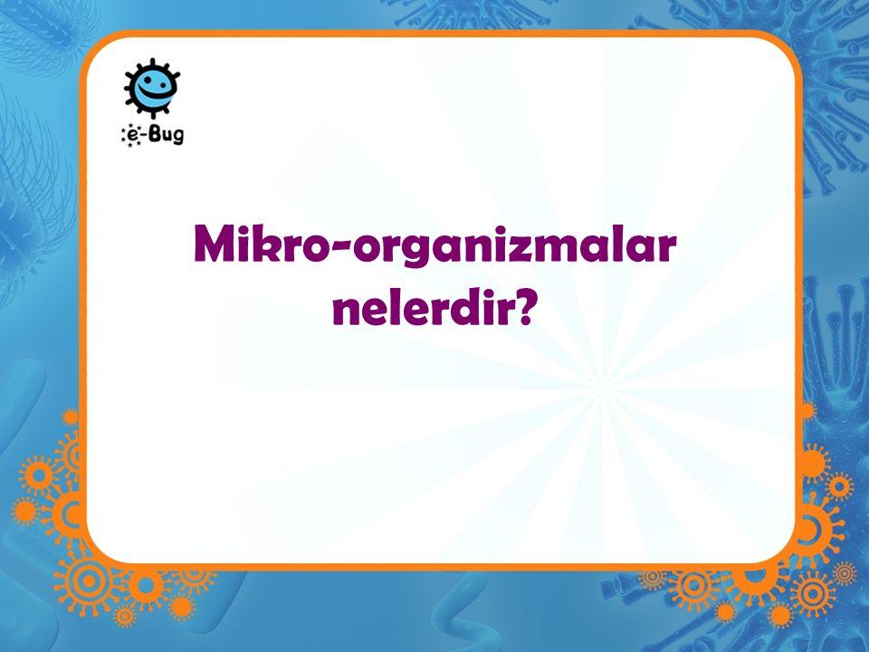 Mikro-organizmalar nelerdir