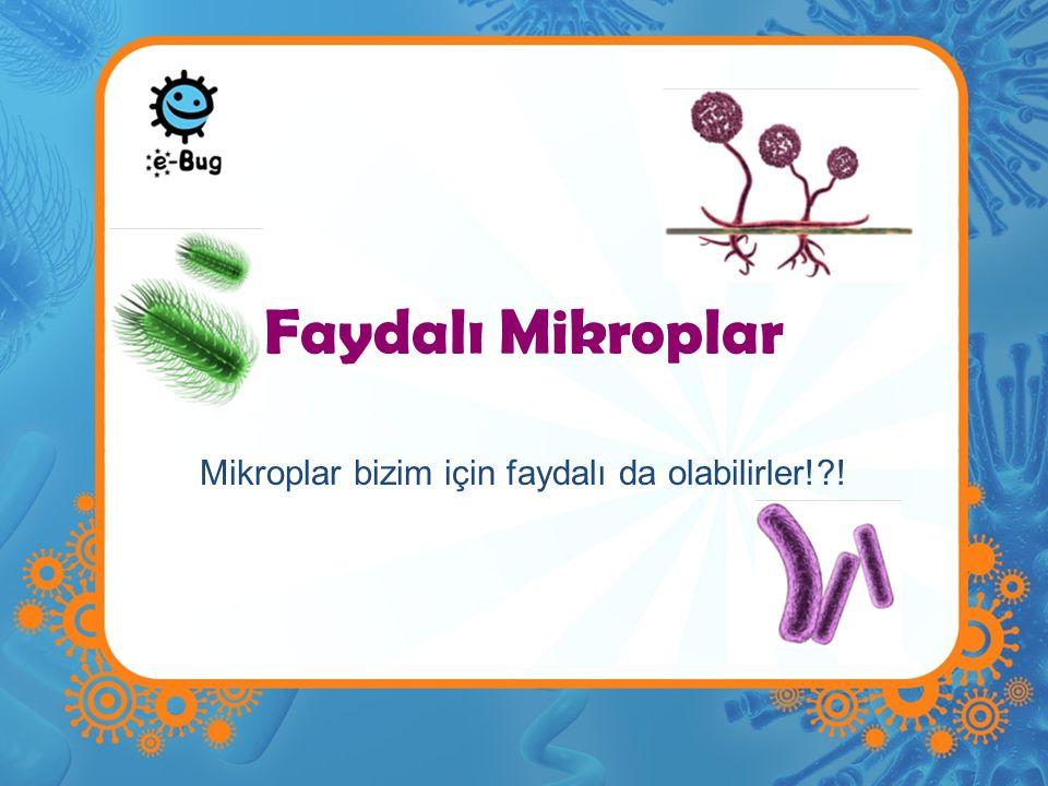 Mikroplar bizim için faydalı da olabilirler! !