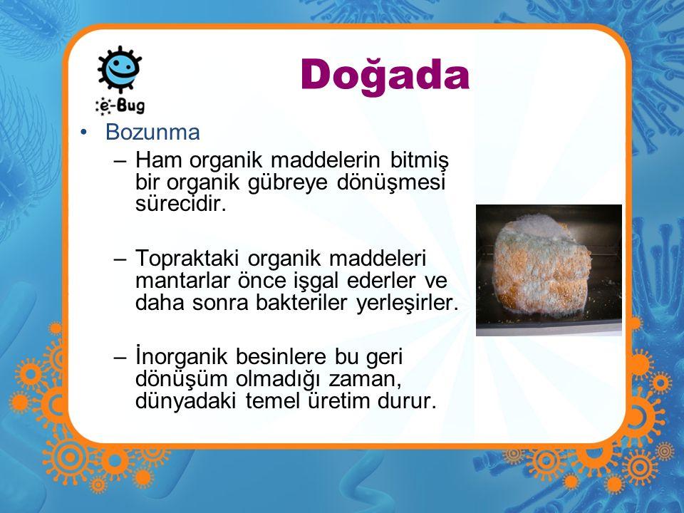 Doğada Bozunma. Ham organik maddelerin bitmiş bir organik gübreye dönüşmesi sürecidir.