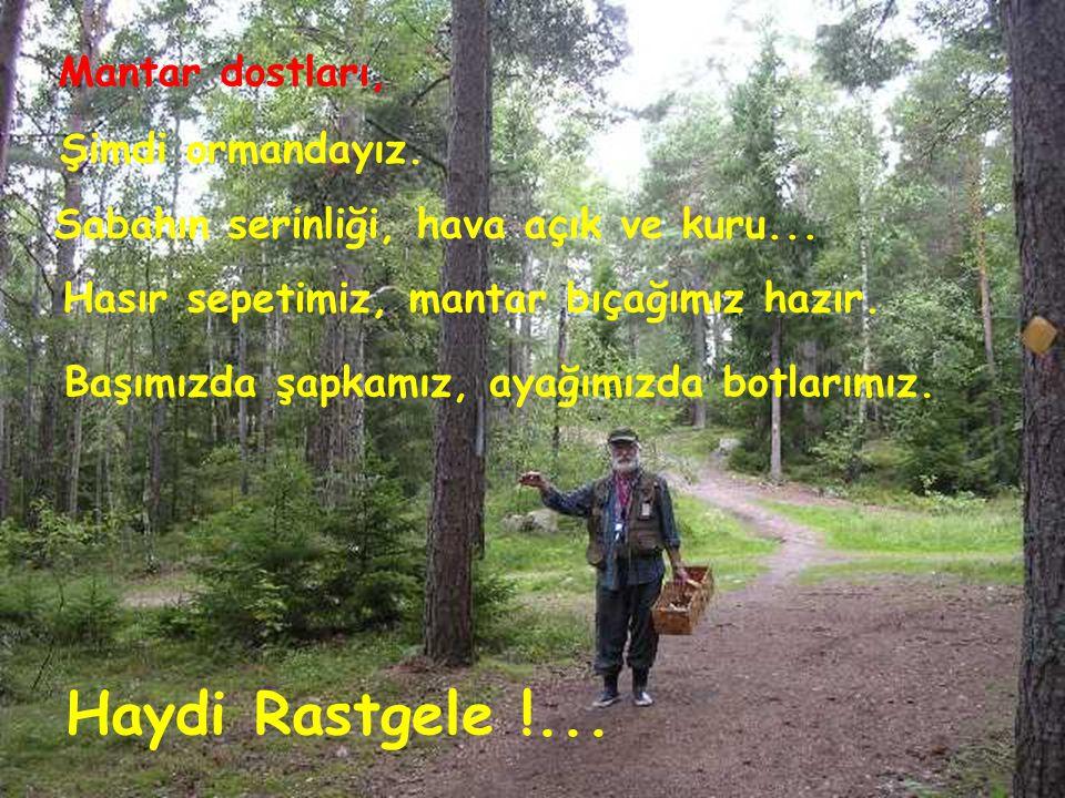Haydi Rastgele !... Mantar dostları, Şimdi ormandayız.