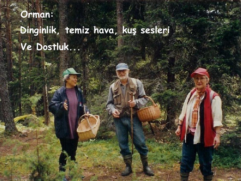 Orman: Dinginlik, temiz hava, kuş sesleri Ve Dostluk...