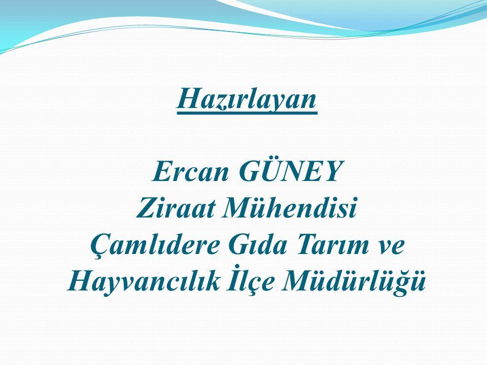 Hazırlayan Ercan GÜNEY Ziraat Mühendisi Çamlıdere Gıda Tarım ve Hayvancılık İlçe Müdürlüğü