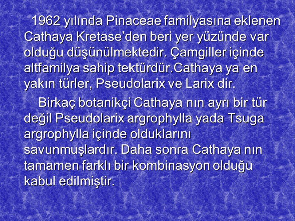 1962 yılında Pinaceae familyasına eklenen Cathaya Kretase'den beri yer yüzünde var olduğu düşünülmektedir. Çamgiller içinde altfamilya sahip tektürdür.Cathaya ya en yakın türler, Pseudolarix ve Larix dir.