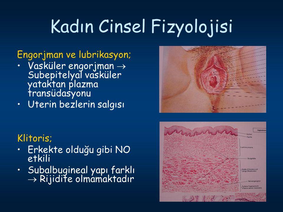 Kadın Cinsel Fizyolojisi