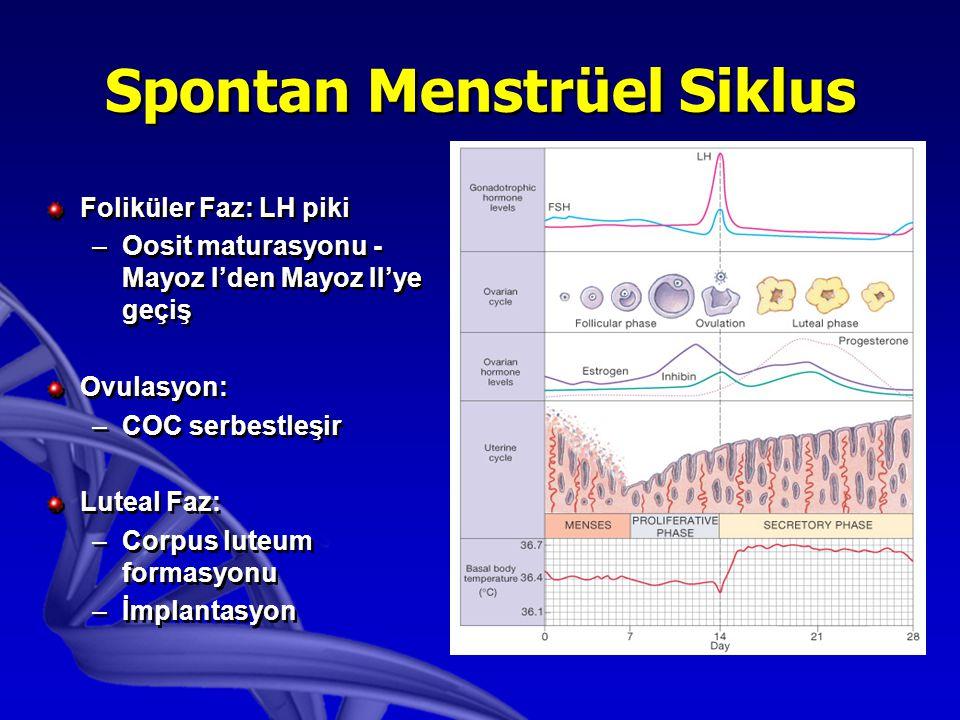 Spontan Menstrüel Siklus