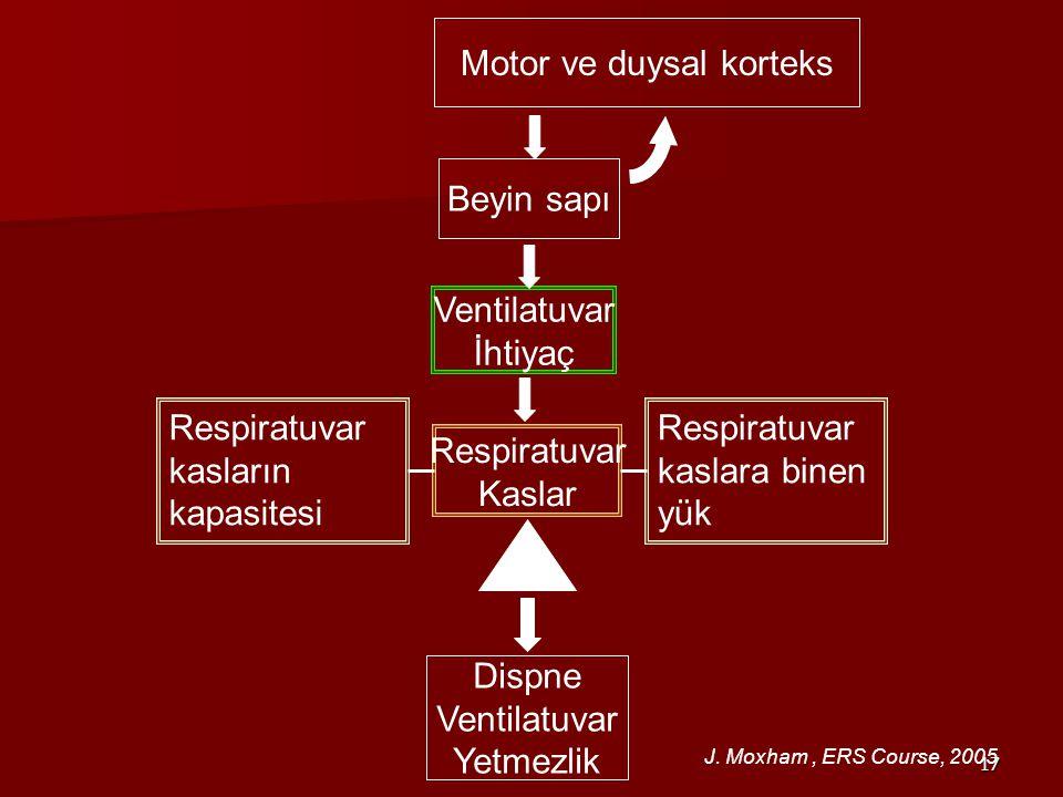 Motor ve duysal korteks