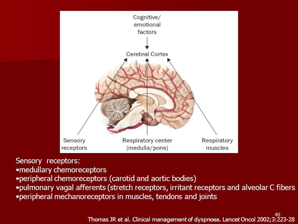 medullary chemoreceptors