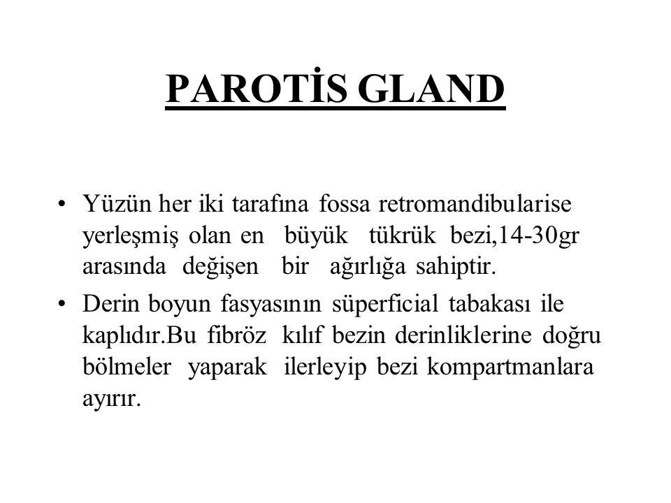 PAROTİS GLAND