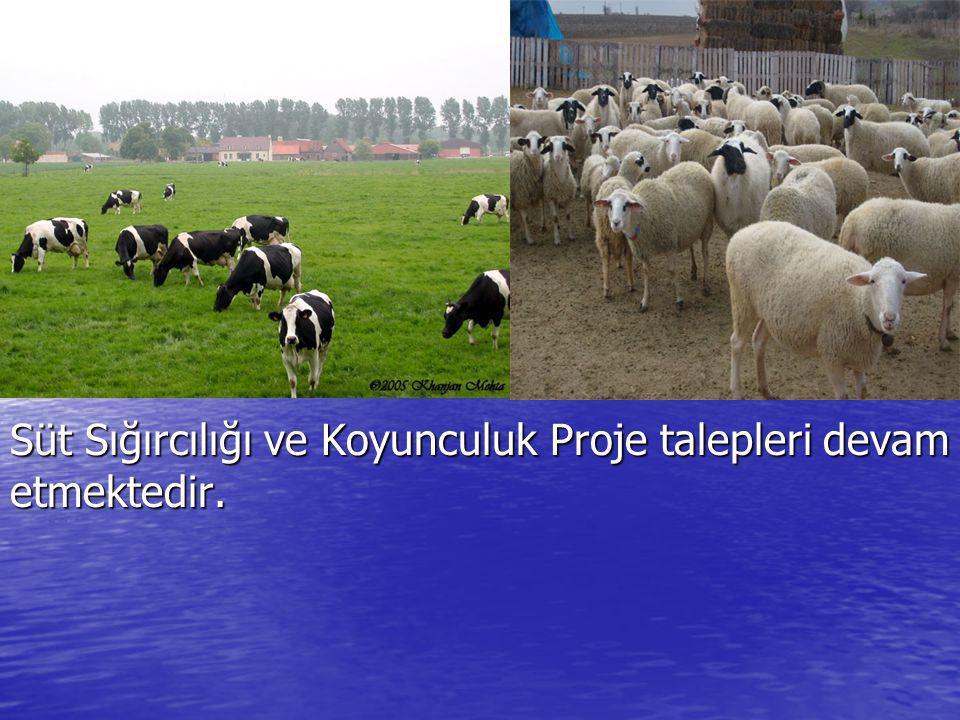 Süt Sığırcılığı ve Koyunculuk Proje talepleri devam etmektedir.