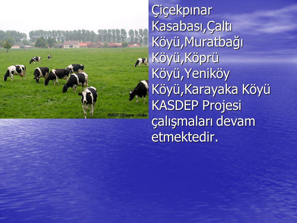 Çiçekpınar Kasabası,Çaltı Köyü,Muratbağı Köyü,Köprü Köyü,Yeniköy Köyü,Karayaka Köyü KASDEP Projesi çalışmaları devam etmektedir.