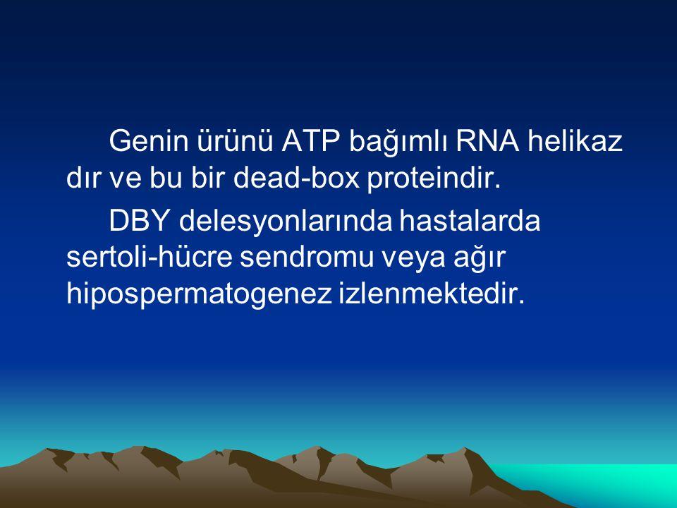 Genin ürünü ATP bağımlı RNA helikaz dır ve bu bir dead-box proteindir.