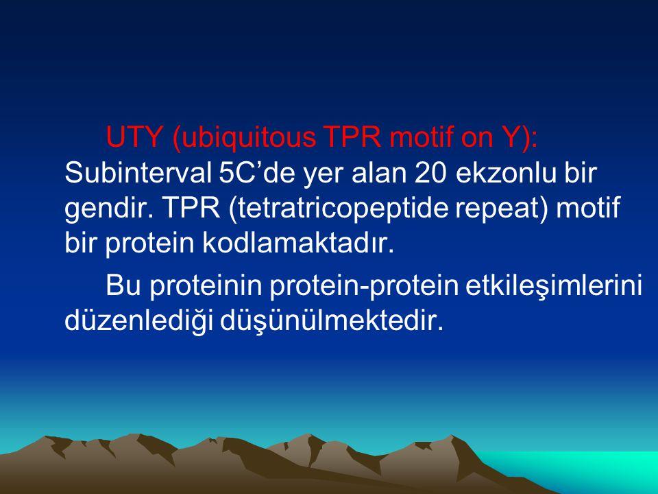 UTY (ubiquitous TPR motif on Y): Subinterval 5C'de yer alan 20 ekzonlu bir gendir. TPR (tetratricopeptide repeat) motif bir protein kodlamaktadır.