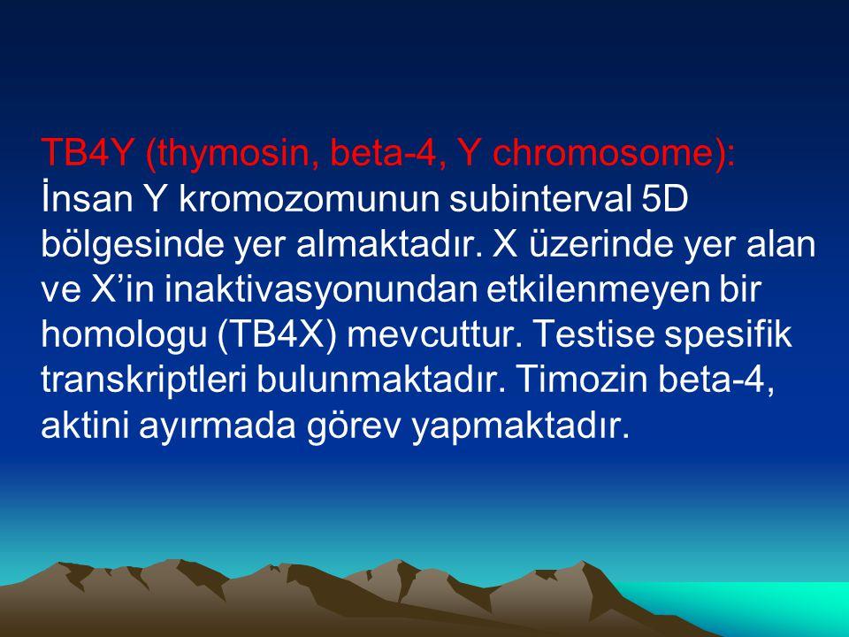 TB4Y (thymosin, beta-4, Y chromosome): İnsan Y kromozomunun subinterval 5D bölgesinde yer almaktadır.