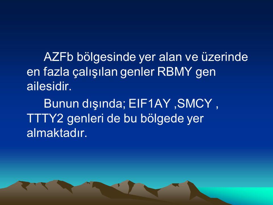 AZFb bölgesinde yer alan ve üzerinde en fazla çalışılan genler RBMY gen ailesidir.