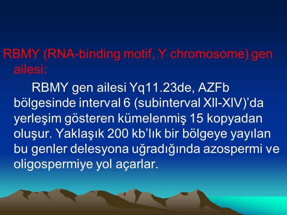 RBMY (RNA-binding motif, Y chromosome) gen ailesi:
