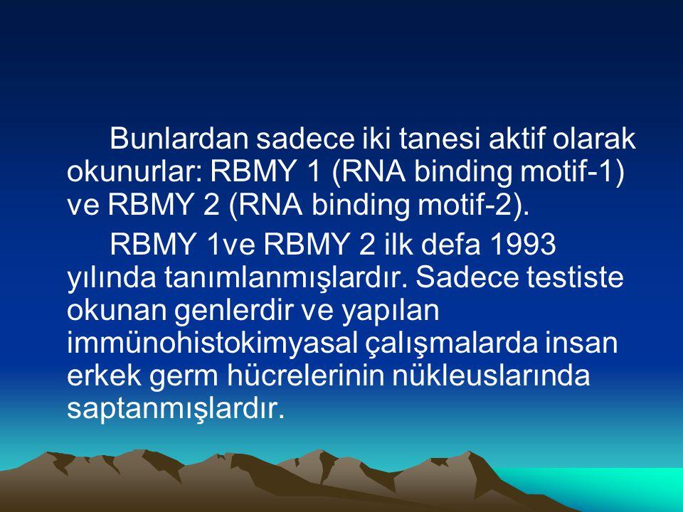 Bunlardan sadece iki tanesi aktif olarak okunurlar: RBMY 1 (RNA binding motif-1) ve RBMY 2 (RNA binding motif-2).
