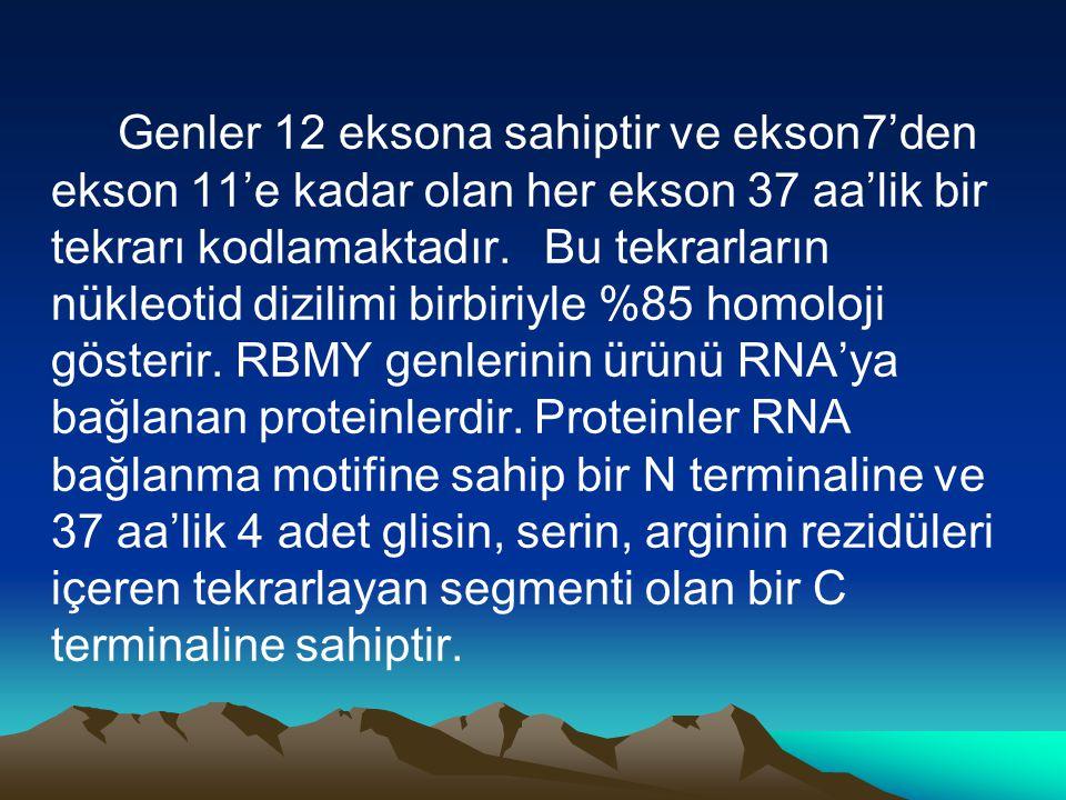 Genler 12 eksona sahiptir ve ekson7'den ekson 11'e kadar olan her ekson 37 aa'lik bir tekrarı kodlamaktadır.