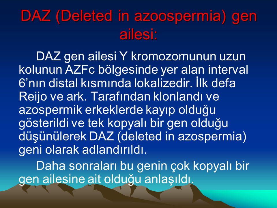 DAZ (Deleted in azoospermia) gen ailesi: