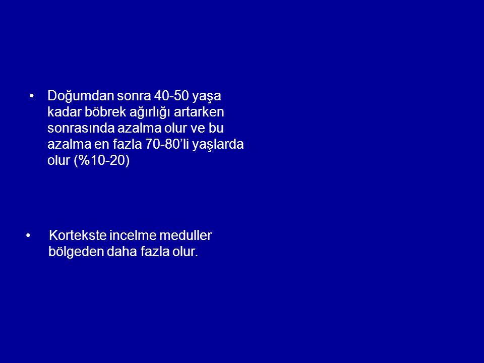 Doğumdan sonra 40-50 yaşa kadar böbrek ağırlığı artarken sonrasında azalma olur ve bu azalma en fazla 70-80'li yaşlarda olur (%10-20)