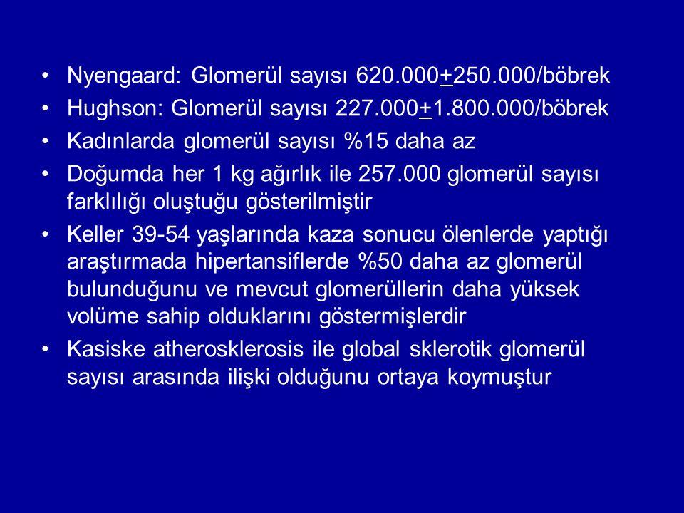Nyengaard: Glomerül sayısı 620.000+250.000/böbrek