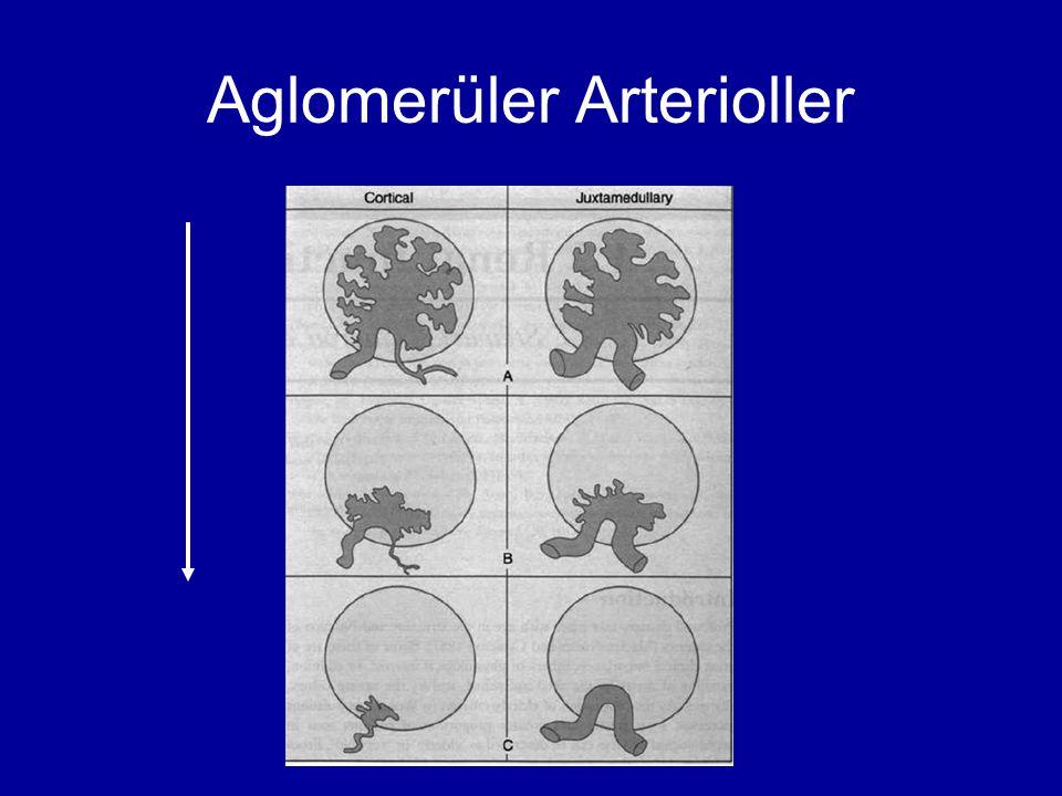 Aglomerüler Arterioller