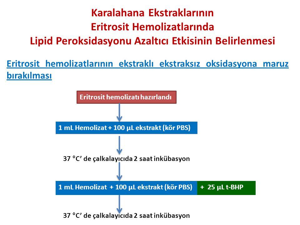 Karalahana Ekstraklarının Eritrosit Hemolizatlarında