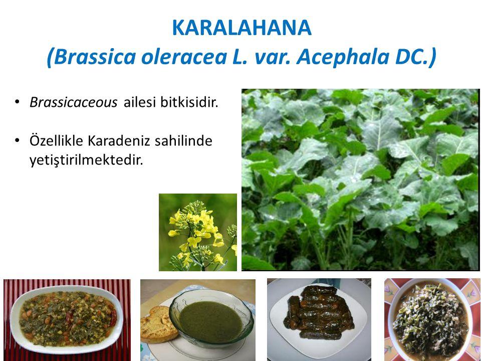 (Brassica oleracea L. var. Acephala DC.)