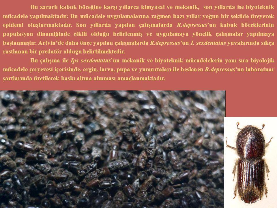 Bu zararlı kabuk böceğine karşı yıllarca kimyasal ve mekanik, son yıllarda ise biyoteknik mücadele yapılmaktadır. Bu mücadele uygulamalarına rağmen bazı yıllar yoğun bir şekilde üreyerek epidemi oluşturmaktadır. Son yıllarda yapılan çalışmalarda R.depressus'un kabuk böceklerinin populasyon dinamiğinde etkili olduğu belirlenmiş ve uygulamaya yönelik çalışmalar yapılmaya başlanmıştır. Artvin'de daha önce yapılan çalışmalarda R.depressus'un I. sexdentatus yuvalarında sıkça rastlanan bir predatör olduğu belirtilmektedir.