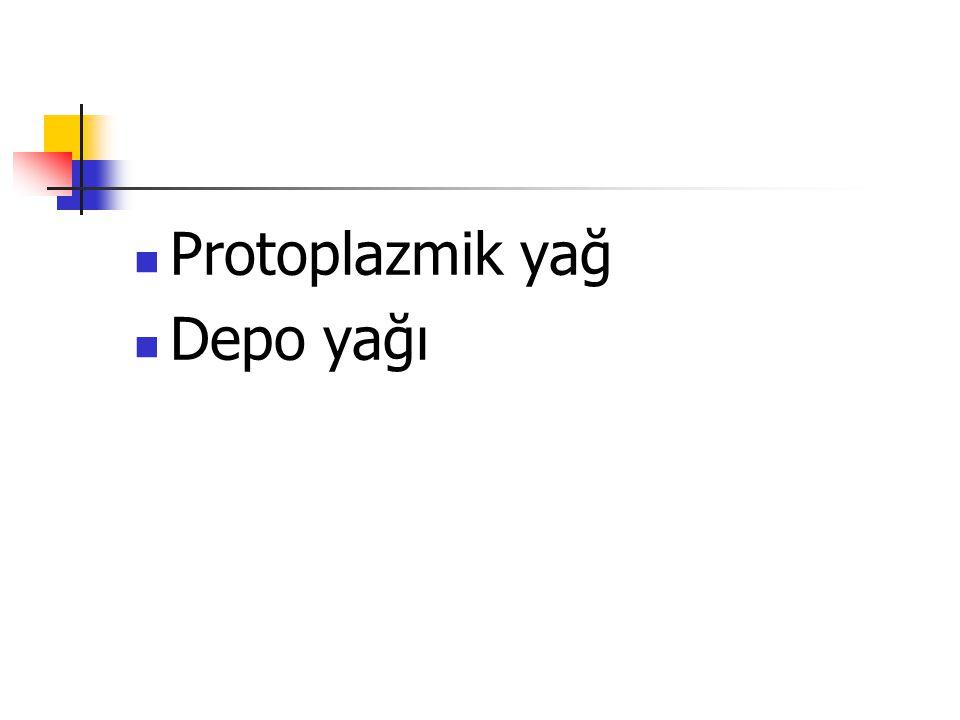 Protoplazmik yağ Depo yağı