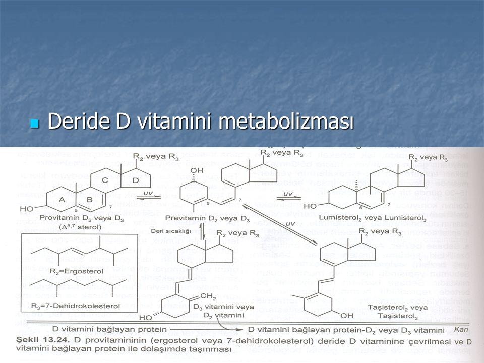 Deride D vitamini metabolizması