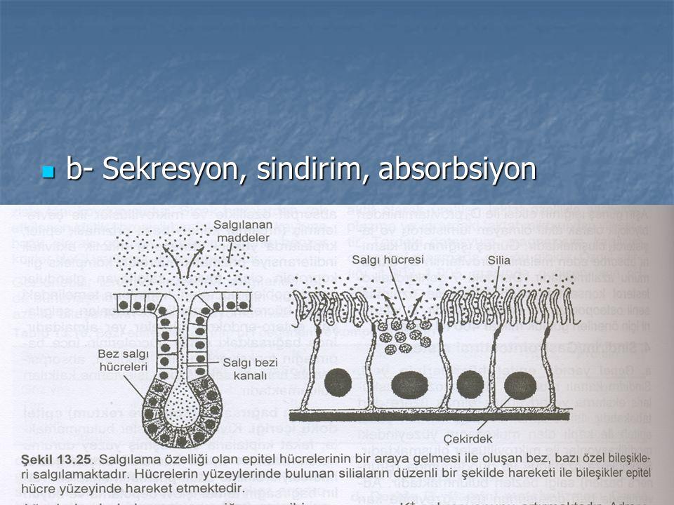 b- Sekresyon, sindirim, absorbsiyon