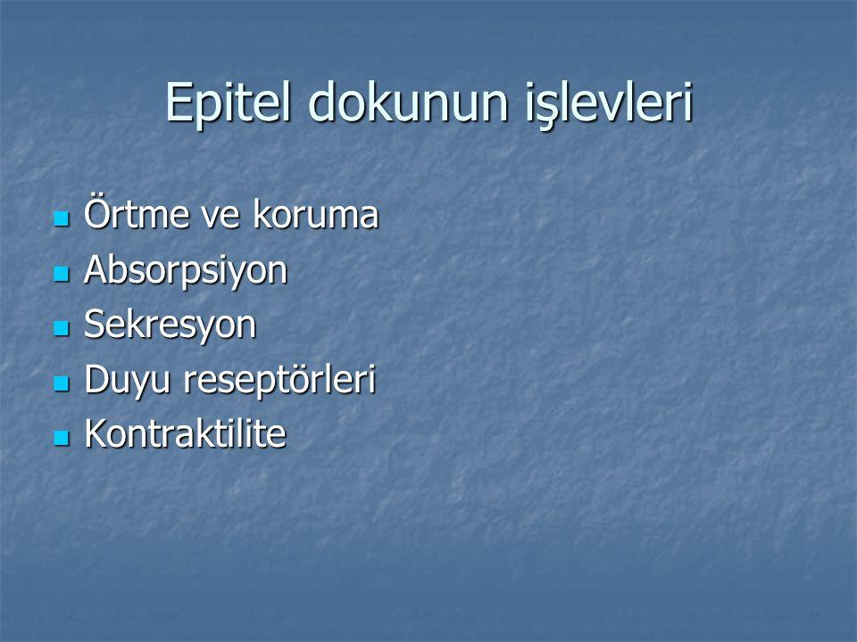 Epitel dokunun işlevleri