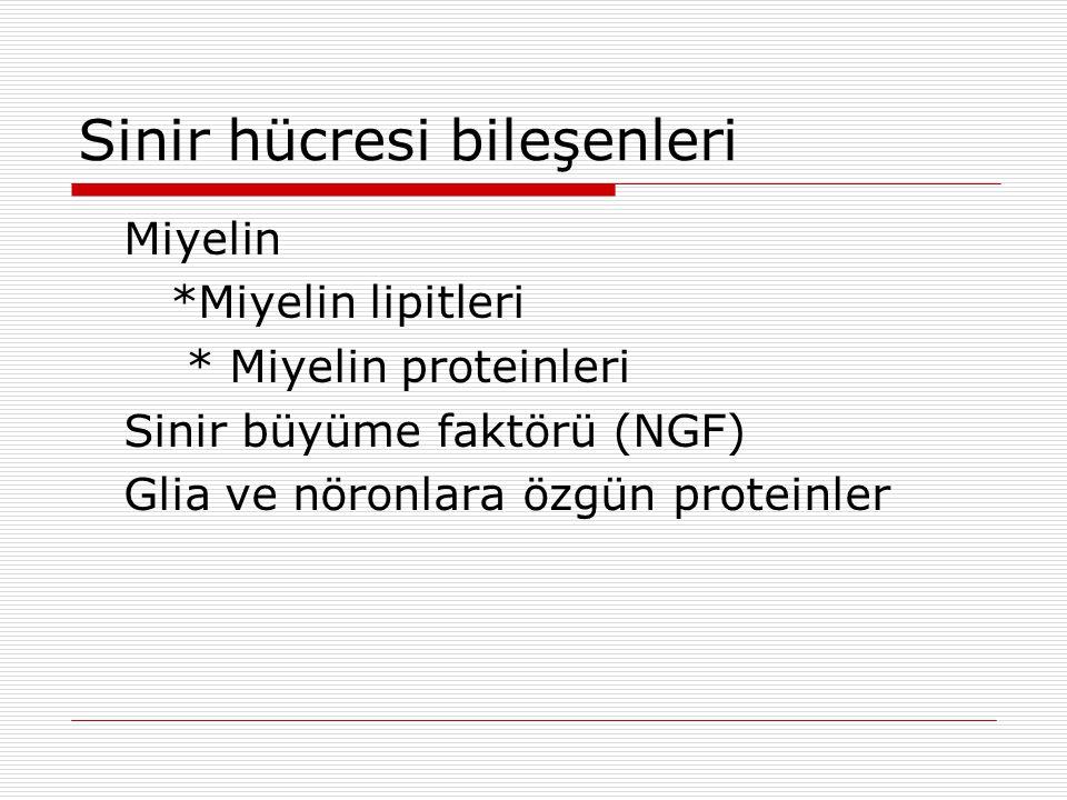 Sinir hücresi bileşenleri