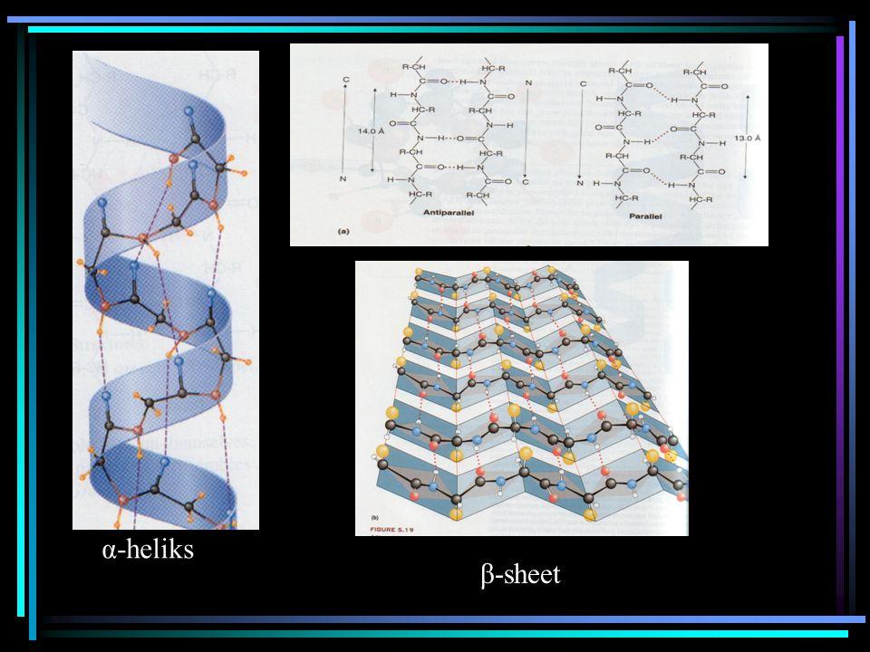 α-heliks β-sheet