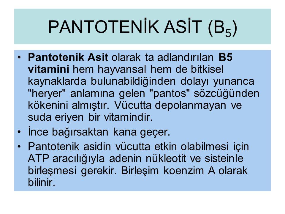 PANTOTENİK ASİT (B5)