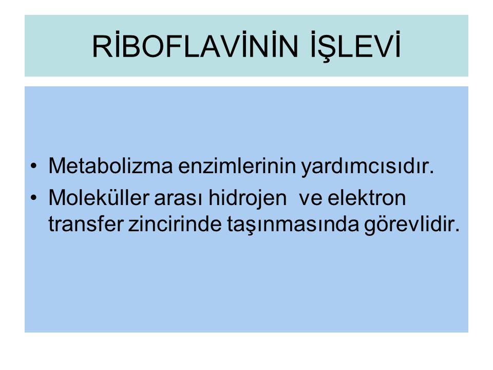 RİBOFLAVİNİN İŞLEVİ Metabolizma enzimlerinin yardımcısıdır.