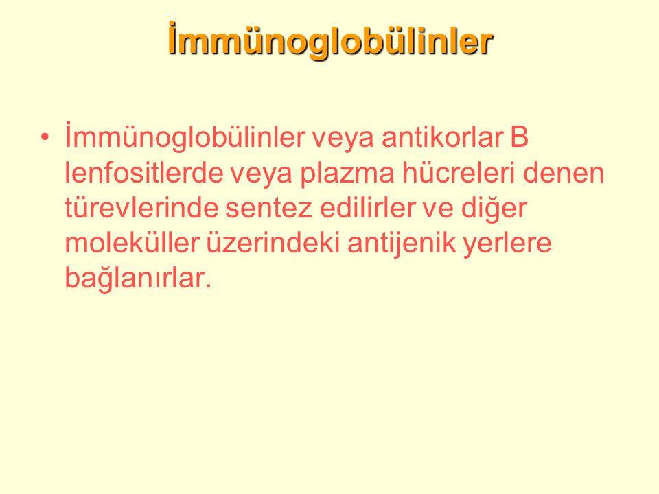 İmmünoglobülinler
