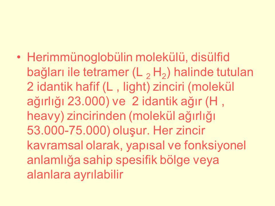 Herimmünoglobülin molekülü, disülfid bağları ile tetramer (L 2 H2) halinde tutulan 2 idantik hafif (L , light) zinciri (molekül ağırlığı 23.000) ve 2 idantik ağır (H , heavy) zincirinden (molekül ağırlığı 53.000-75.000) oluşur.