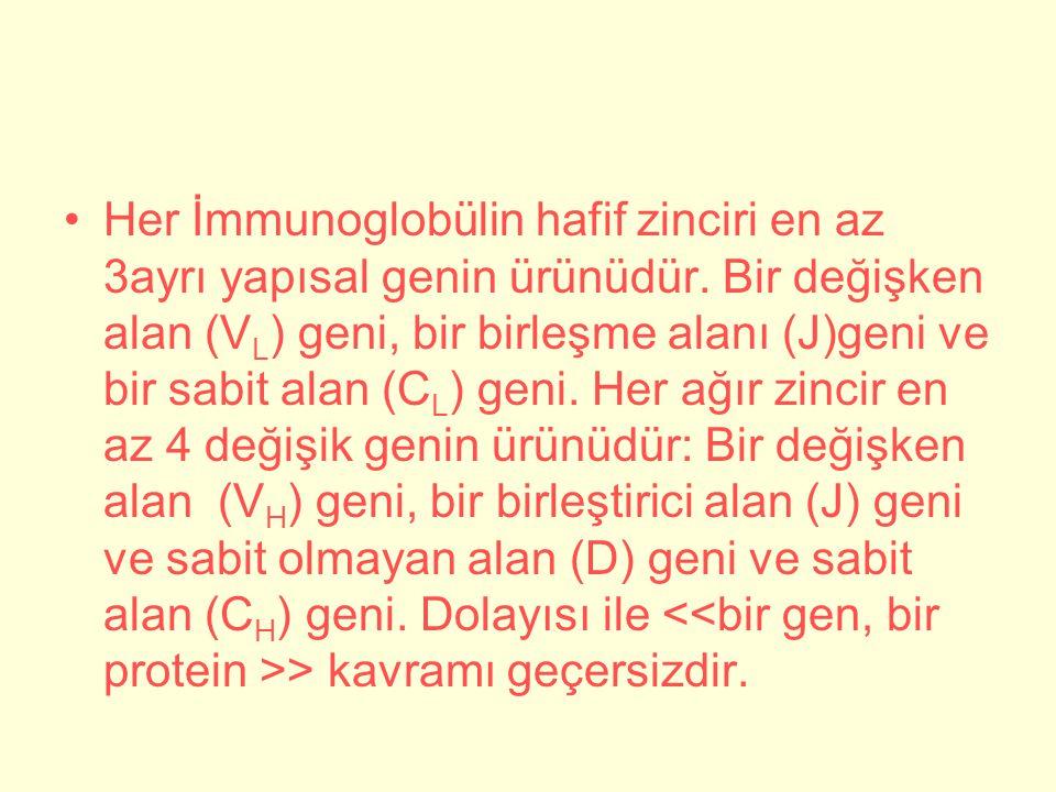 Her İmmunoglobülin hafif zinciri en az 3ayrı yapısal genin ürünüdür